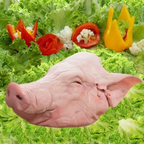 Cabeça de Porco Cada